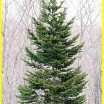 クリスマスツリーを飾る意味って何だっけ?